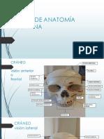 Atlas de Anatomía Proyecto