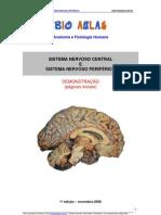 Biologia - Sistema Nervoso Central Perifárico Demo