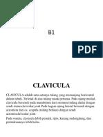 b1 Clavicula