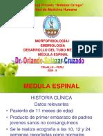 1. Médula Espinal - Dr. Salazar- Morfofisiología I UPAO