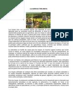 La Agricultura Maya.docx