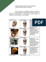 antropologia maryuri.docx