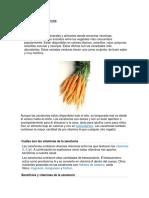 Vitaminas de la zanahori1.docx