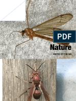 Nature - A Photobook