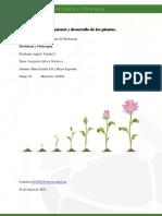 MCalymayor_ Crecimiento y desarrollo de las plantas.pdf