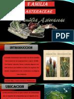 astaraceae