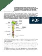 Inyectores.docx