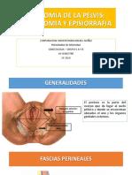 2 - Anatomia de La Pelvis