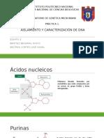 Presentación DNA. Practica 1 .pptx