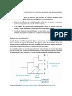 Árboles filogeneticos.docx