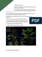 NUTRICION MINERAL EN LA PRODUCCION DE PALTOS productores pequeños.docx · versión.docx