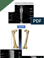 Anatomia Radiologica m.inferior