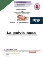 2da Clase de Anatomia Obstetrica