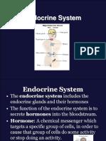 Endocrine System G10.ppt