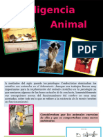 INTELIGENCIA ANIMAL.pptx