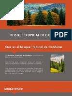 Bosque Tropical de Coniferas