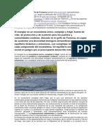 Imforme Ambienta.docx