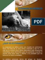 Eutanasia en Animales