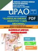 Glándulas Anexas Al Tubo Digestivo y Cavidad Peritoneal
