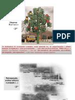 apresentação desenvolvimento sustentável.pptx