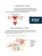 Human Reproductive   System.docx
