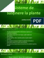 Clasa 6 Bio Sisteme de Sustinere La Plante
