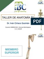 ANATOMÍA II.pdf