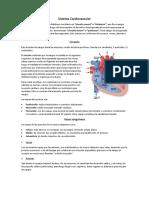11- Cardiovascular.docx