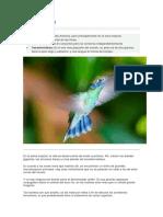 colibri.docx