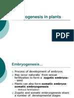 10 Embryogenesis.ppt