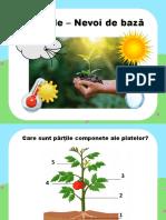 Nevoile de Baza Ale Plantelor