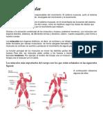 El sistema muscular.docx
