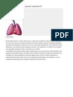 Estructura Sistema Respiratorio