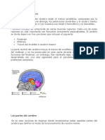 sistemas operativos cerebro.docx