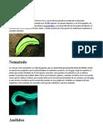 Platelmintos.docx