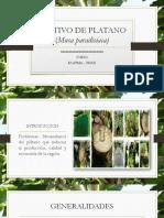 Cultivo de Platano (Musa Paradisiaca)
