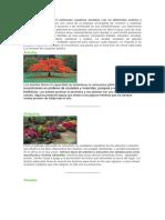Las plantas ornamentales.docx