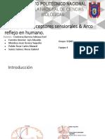 Receptores sensiorales & 7