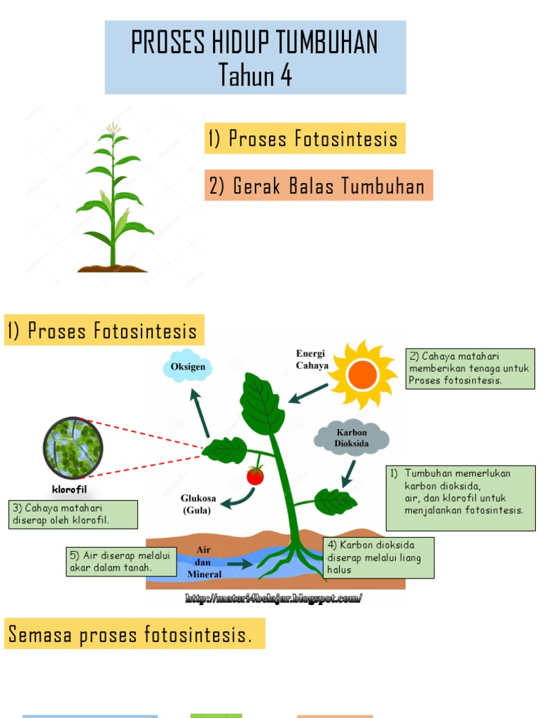 Proses Hidup Tumbuhan Pptx