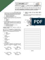 CIRCULACION EN PLANTAS.docx