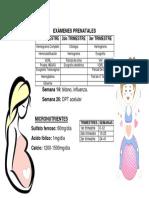 EXAMENES PRENATALES.docx