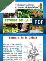 citologia diapositiva.formas de celulas.pdf