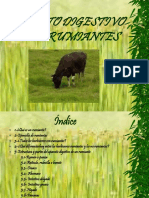 rumiantes-.ppt