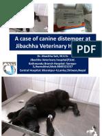 A Case of Canine Distemper at Jibachha Veterinary hospital