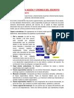 Patología Del Escroto