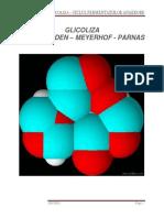 35467294-Glicoliza-convertito.docx