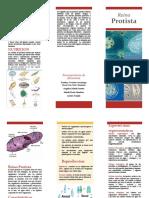 folleto protistas
