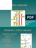 10 Compartimentos y transporte intracelular. Tráfico vesicular