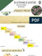 Streptococcus Pyogenes presentación UAQ