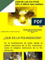 7. Polinización Sóstenes
